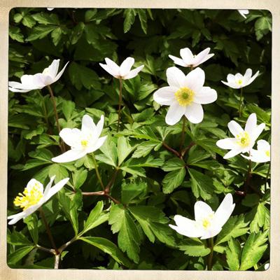 Flowerlaugh2