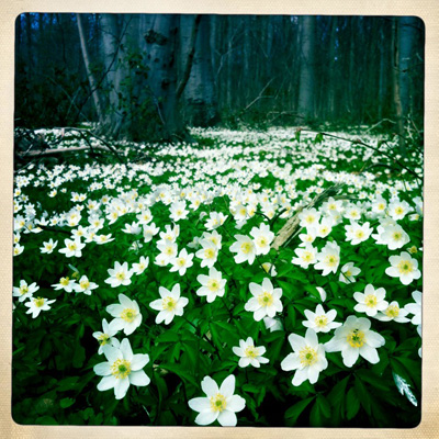 Flowerlaugh3